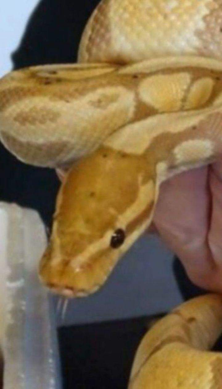 Украинец пытался вывезти в Польшу более полутора сотен экзотических змей и ящериц