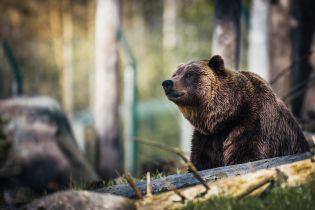 В российском зоопарке дрессировщица потеряла ногу после нападения медведя