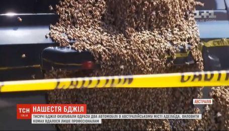 Пчелы атакуют автомобили в австралийском городе Аделаида