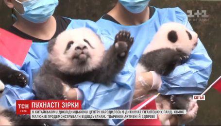 В китайском исследовательском центре посетителям показали 7 детенышей гигантских панд