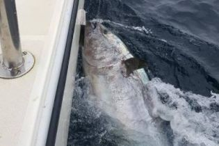 Ирландец выловил редкого тунца весом 274 килограмма