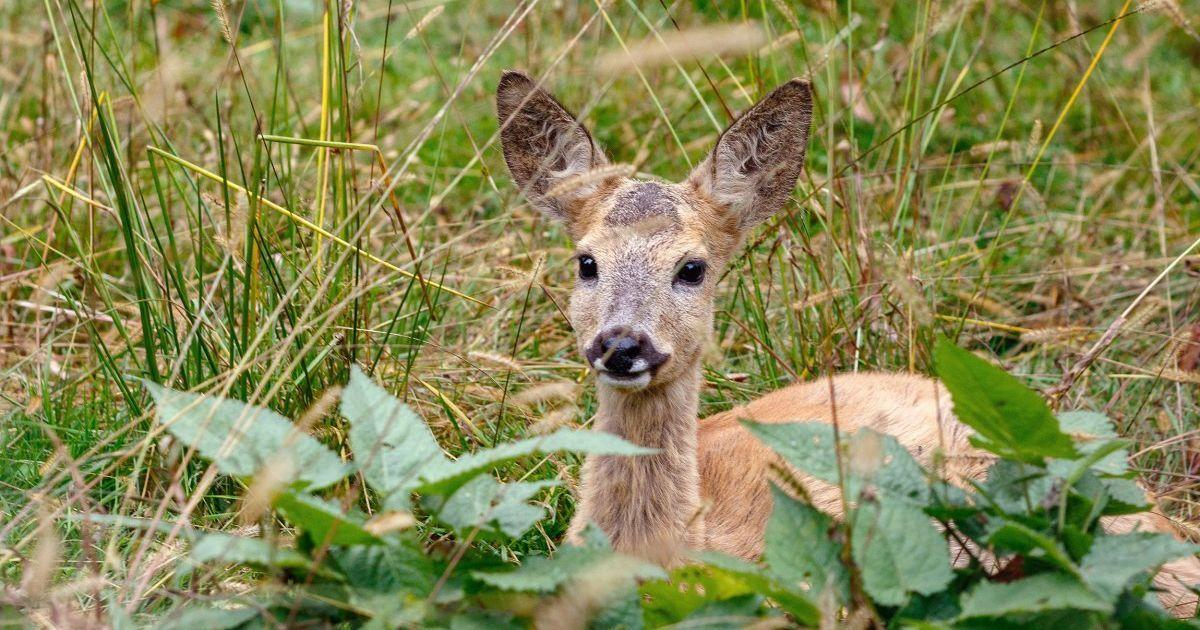 """В одеському зоопарку відвідувачка вдерлася до вольєра, аби """"врятувати"""" козуленя: тварина померла"""