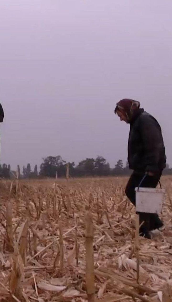 Народні депутати пропонують селянам письмово попереджати фермера про намір продати землю