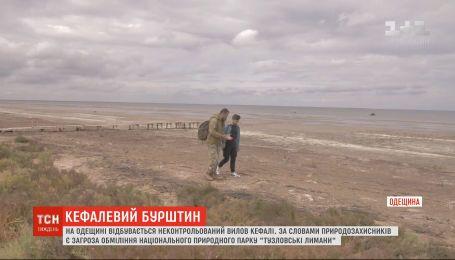 """Природный парк """"Тузловские лиманы"""" мелеет из-за неконтролируемой ловли кефали - экологи"""