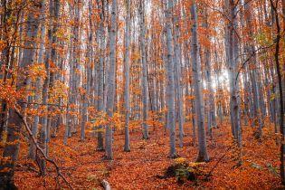 Под Черниговом в лесу нашли повешенным 20-летнего парня