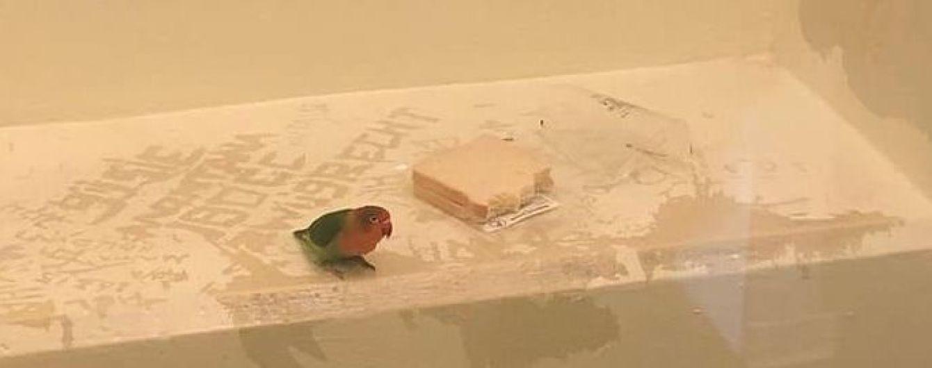 У Нідерландах поліцейські запроторили за ґрати папугу-крадія