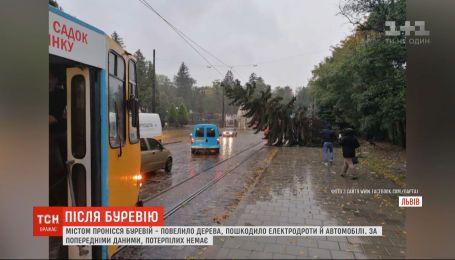 Буревій повалив дерева та обірвав електродроти у Львові