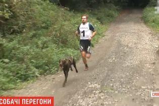 Собачьи бега: в Словакии псы на скорость тянули хозяев на велосипедах