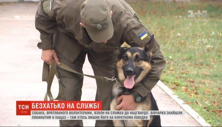 Спасенного волонтерами пса взяли на службу в Нацгвардию