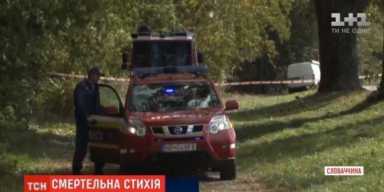 У Словаччині на хлопчика впало дерево, він загинув
