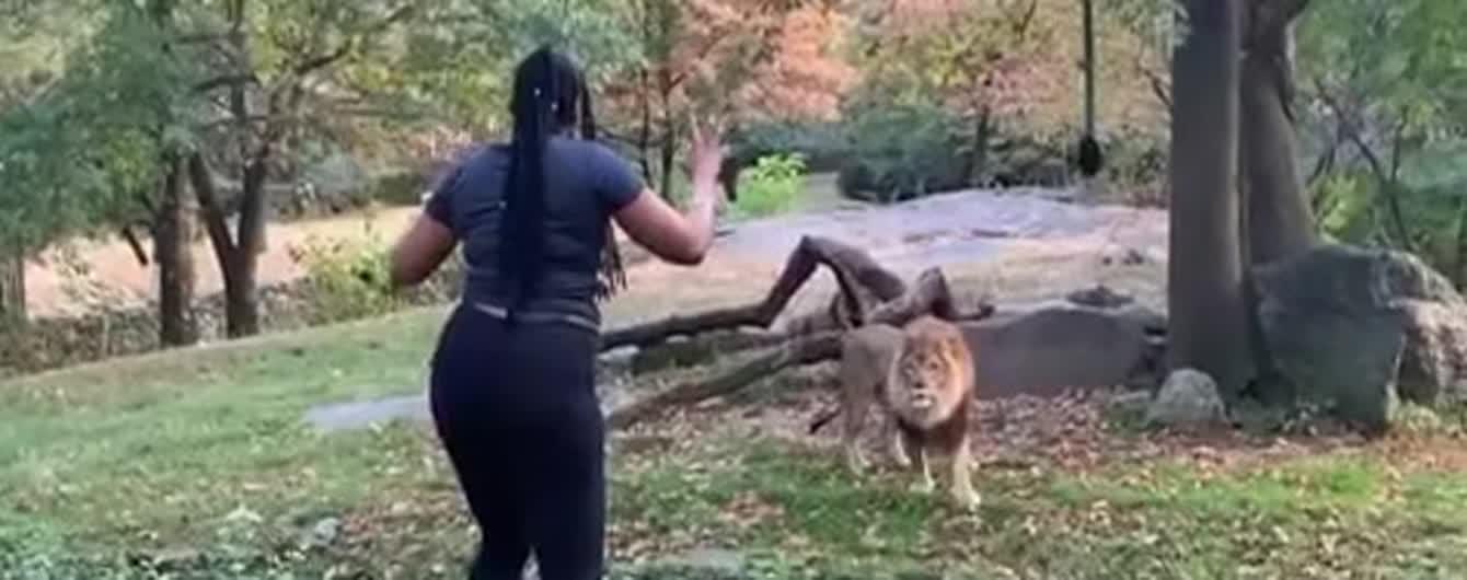 У США жінка перелізла через огорожу зоопарку і дражнила лева
