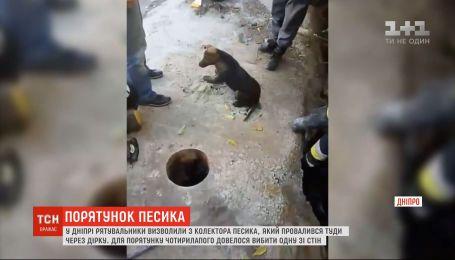 В Днепре спасатели освободили собаку из шахты коллектора