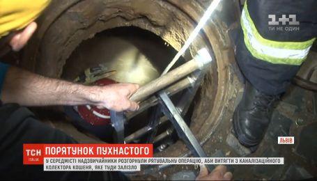 Во Львове чрезвычайники развернули спасательную операцию, чтобы вытащить котёнка с коллектора