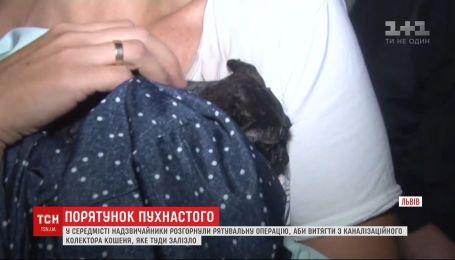 Во Львове чрезвычайники спасли котенка из канализационного коллектора
