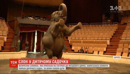 В Харькове слониха пыталась сломать забор детского сада, за которым гуляли дети