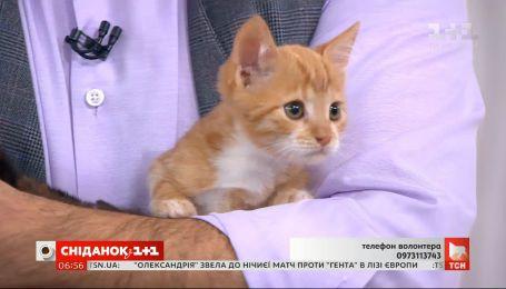 Котята ищут заботливых хозяев