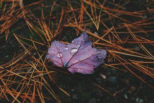 Ночные заморозки, грозы и похолодание: погода в Украине на выходные