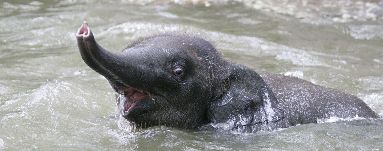 В Адском водопаде в Таиланде погибли шесть слонов в отчаянной попытке спасти друг друга