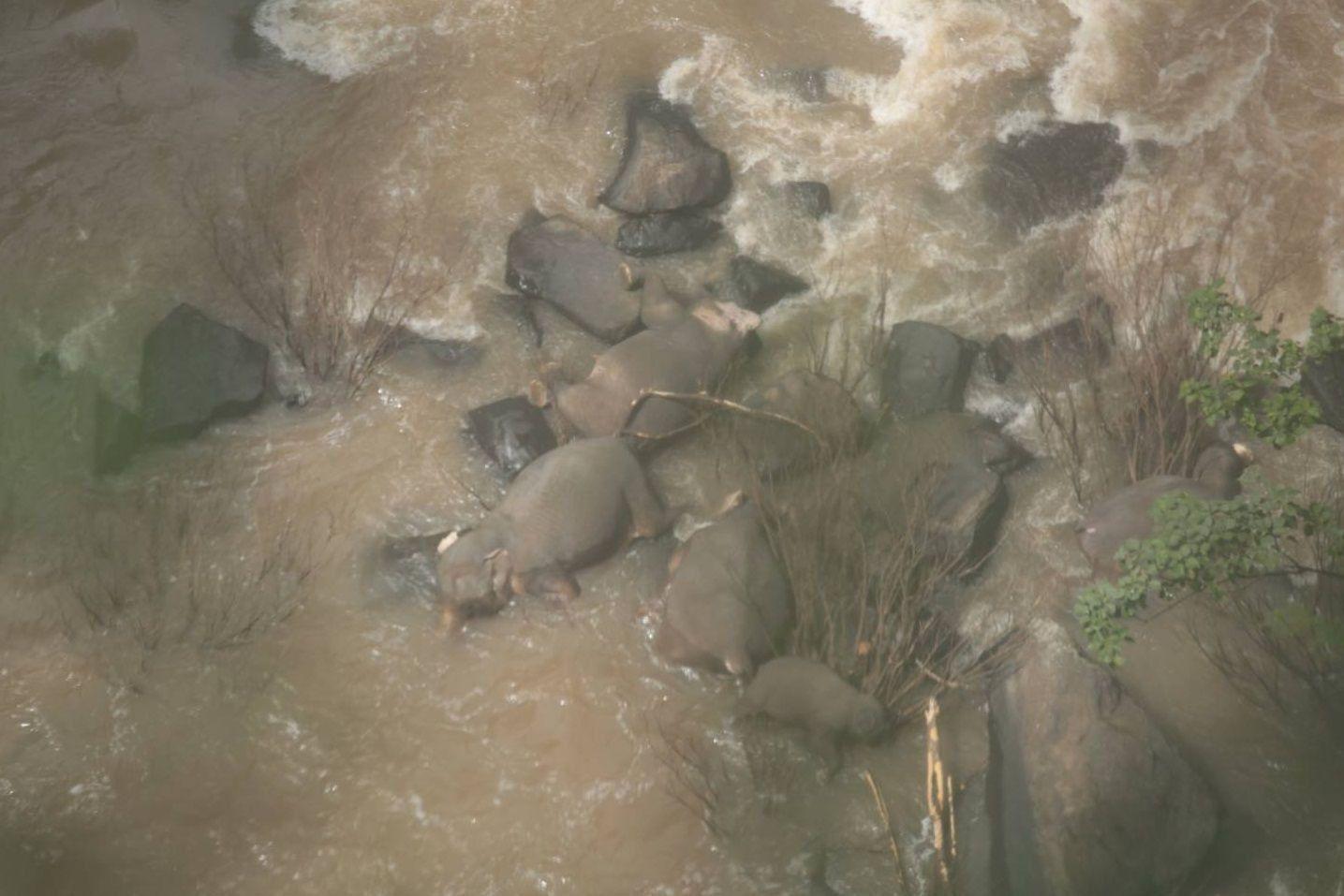 Загибель слонів у Таїланді