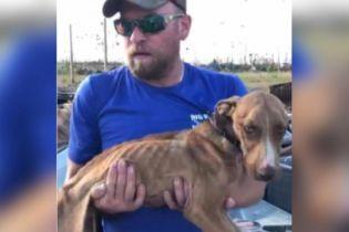 """На Багамах через месяц после урагана """"Дориан"""" под завалами дома нашли живого щенка"""