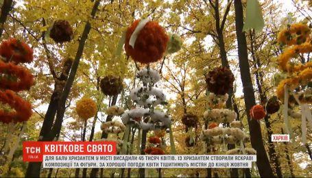 В харьковском экопарке начался ежегодный бал хризантем