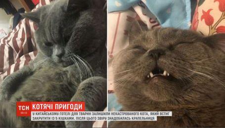 """У китайському готелі для тварин після """"роману"""" з 5 кішками некастрованому коту знадобилася крапельниця"""