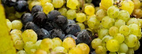 В Україні виноградний бум: скільки коштує ягода та коли подешевшає