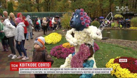 Квіткове свято в Харкові: в екопарку розпочався щорічний бал хризантем