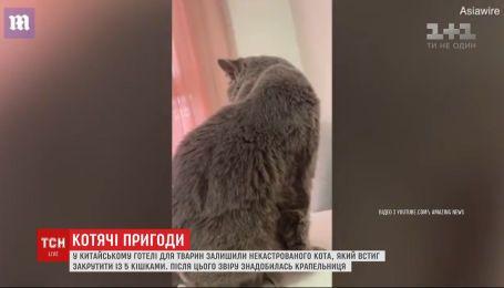 """Коту понадобилась капельница после """"романа"""" с 5 кошками"""