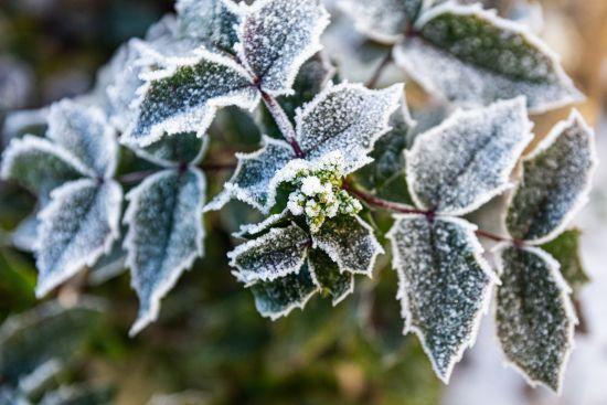 Заморозки та мокрий сніг. Синоптики розповіли, чого чекати від погоди 4 січня