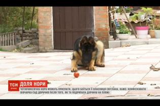 В Чернигове четырехмесячная овчарка поцарапала женщину: пса могут усыпить