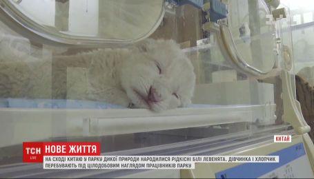 Біла левиця відмовилась від двох дитинчат, які народились у парку дикої природи Китаю
