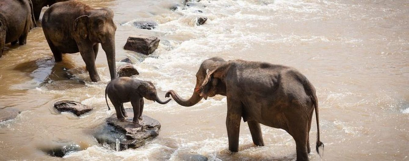 В Таиланде нашли тела 11 слонов, которые пытались спасти слоненок и погибли