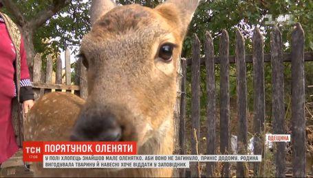 В Одесской области семья выкормила потерянного олененка