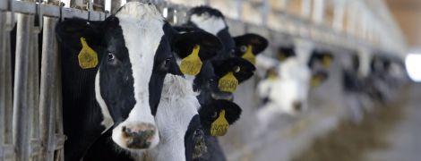 Ученые отредактировали ДНК коров и вывели здоровых животных-мутантов без рогов