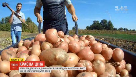 Красна ціна: чи вродила цьогоріч картопля, і яких цін чекати