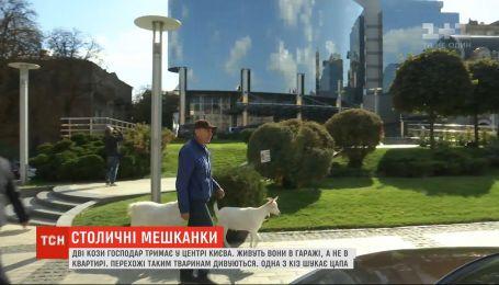 Козы в большом городе: как в центре Киева мужчина держит двух коз