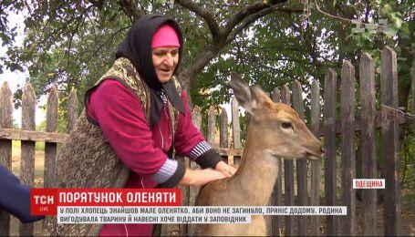 Родина з Одещини планує віддати до заповідника оленя, яке виросло між людей