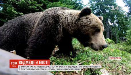 В Высоких Татрах из-за засилья медведей собираются ввести чрезвычайное положение