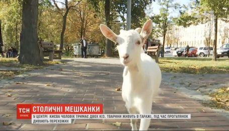 У центрі Києва живуть кози: як і чому тварини опинилися у столиці