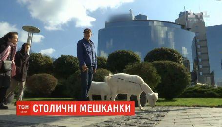 У центрі Києва оселилися двоє кіз: як реагують містяни