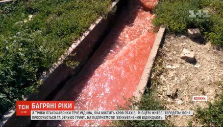Ріки крові: птахофабрика у Володимирі-Волинському зливає у ґрунт відходи з виробництва