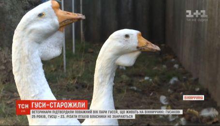Пара гусей более 20 лет живет у семьи в Винницкой области