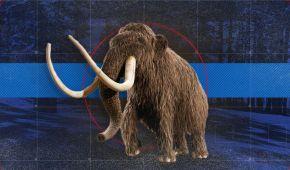 На Буковине нашли зуб мамонта, которому 300 тысяч лет