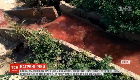 С птицефабрики во Владимире-Волынском в почву попадает жидкость с кровью и остатками тушек