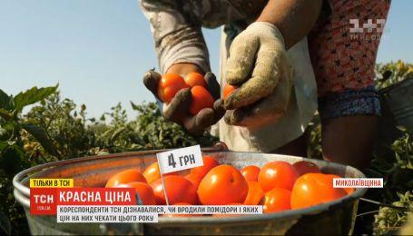 Красна ціна: чи вродили українські томати та яка їхня вартість