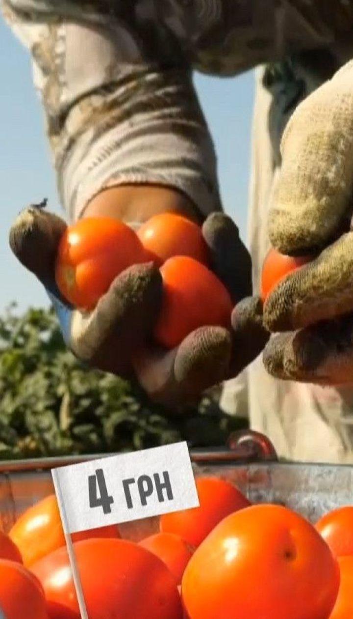 Красная цена: был ли урожай на украинские томаты и какова их стоимость