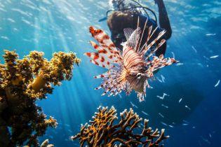 У Єгипті туристам заборонять годувати риб