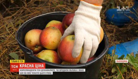Красная цена: о яблочном прорыве в Украине, цене на рынках и причинах неурожая