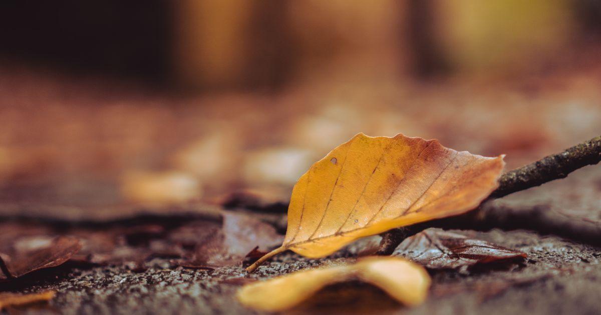 Прогноз погоди на 27 листопада: в Україні буде по-осінньому тепло, місцями туман